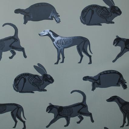 wallpaper,boys,animals,paperboy