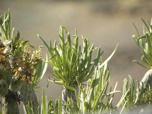 gran canaria, sheraton salobre, 7