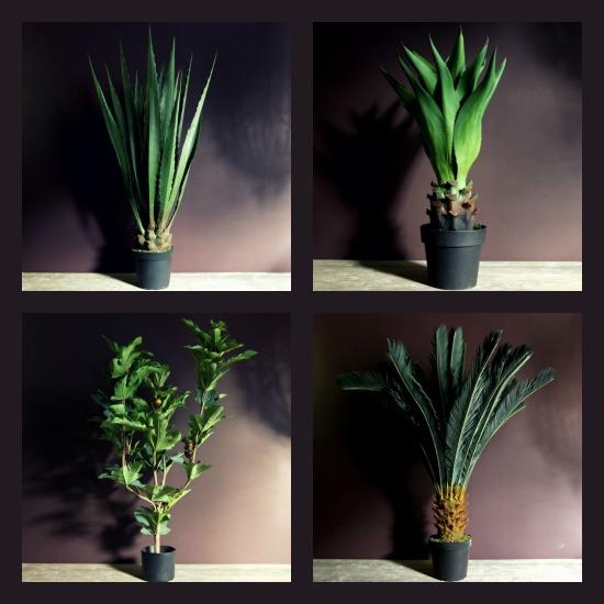 Abigail Ahern Artificial Plants 2