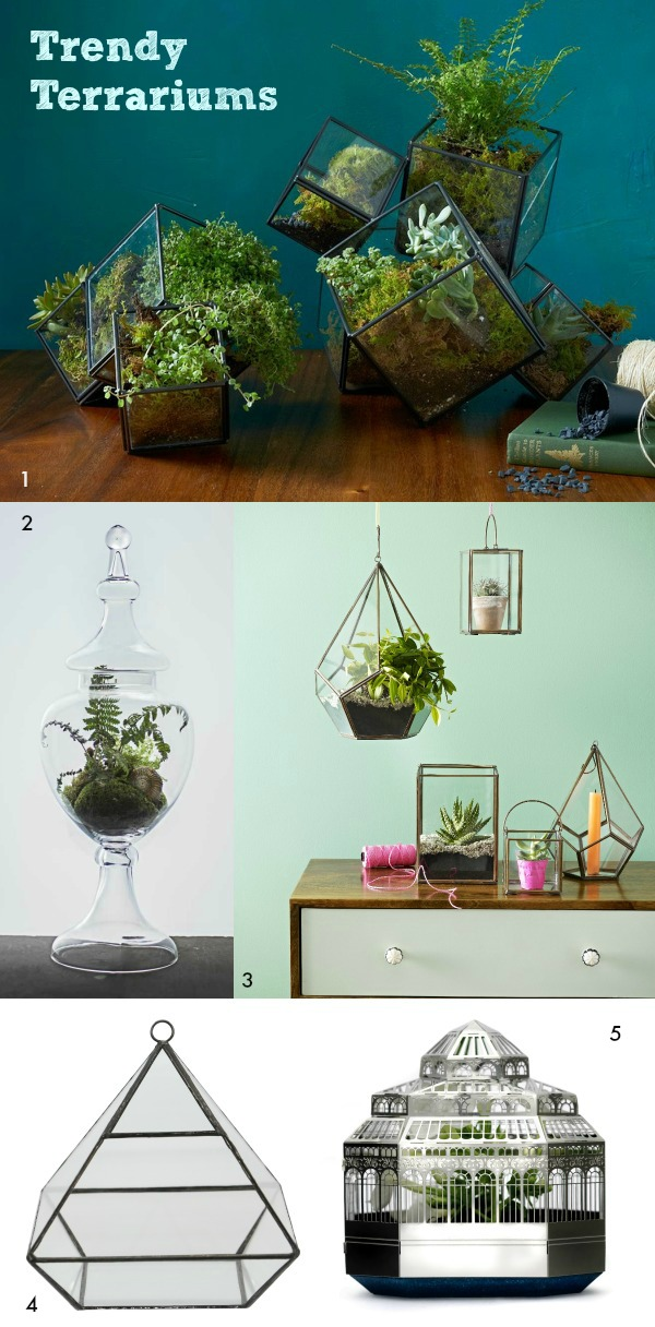 Trendy Terrariums - Dear Designer's Blog [1]
