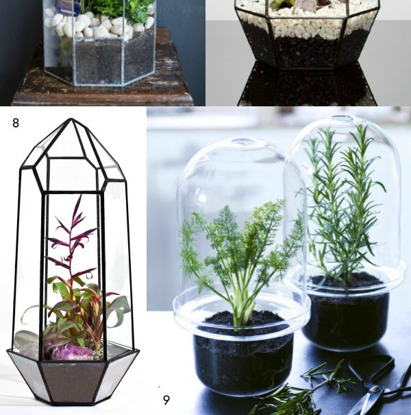 Trendy Terrariums - Dear Designer's Blog [2]
