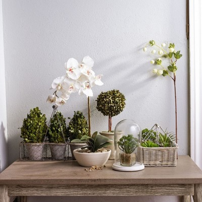 John Lewis, Artificial Plants and Flowers, from £8
