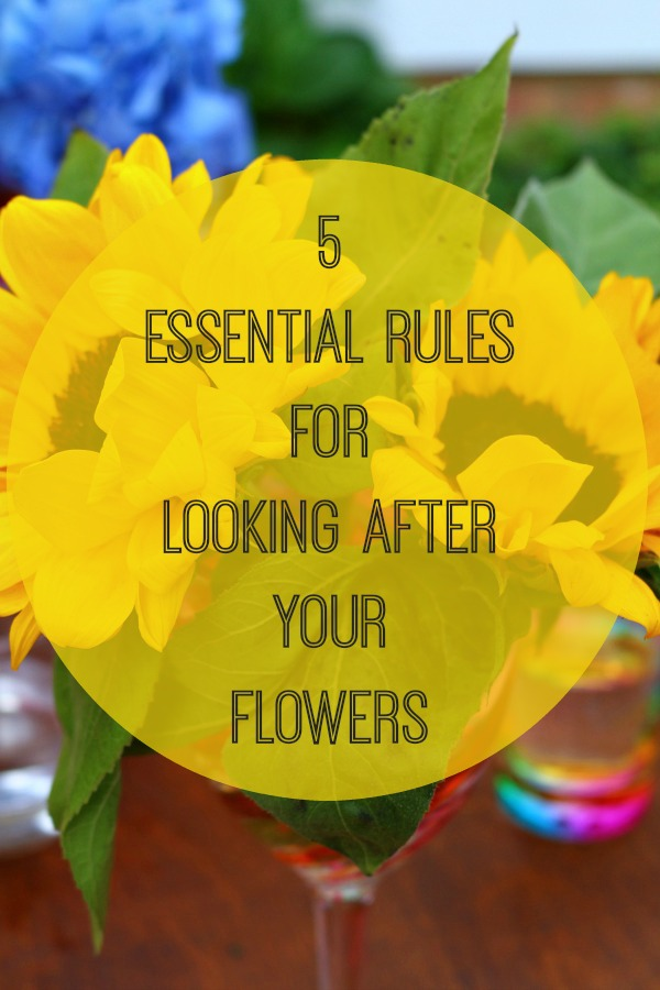 5 Essential Rules for Looking After Your Flowers