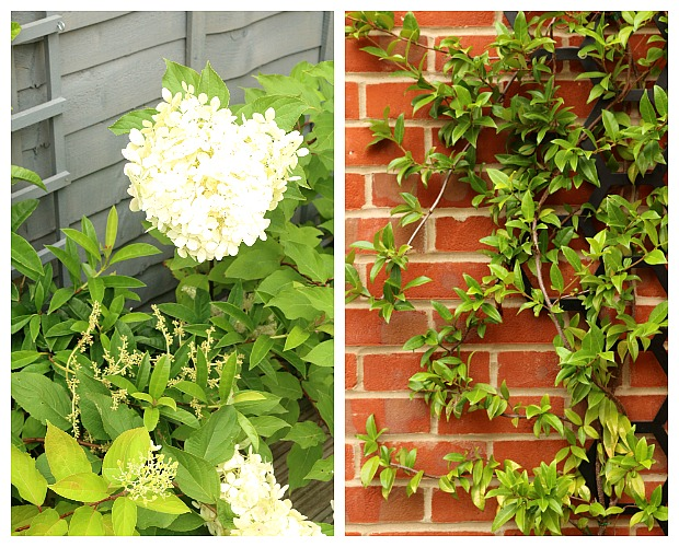 Paint fences and plant climbers against brick walls. Both will soften hard edges.
