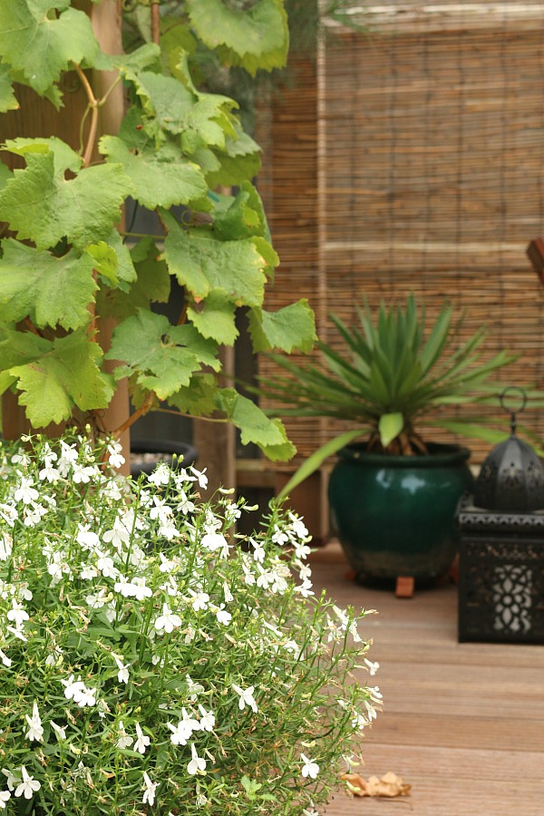 Every garden needs a shady spot. A pergola is perfect.