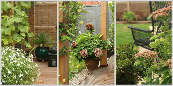Tips and Tricks to soften those hard garden edges