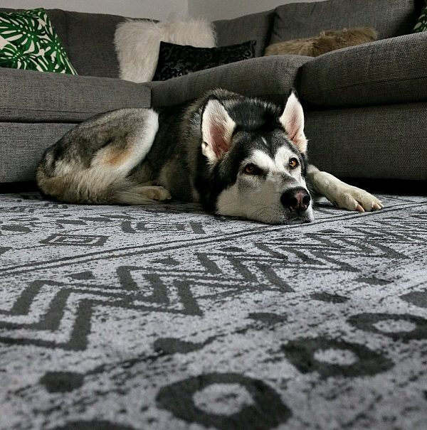 Ethnic pattern kelim rug in black and grey - practical choice for dog owners