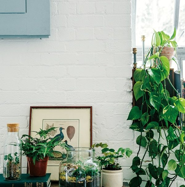 Living with succulents, air plants and cacti