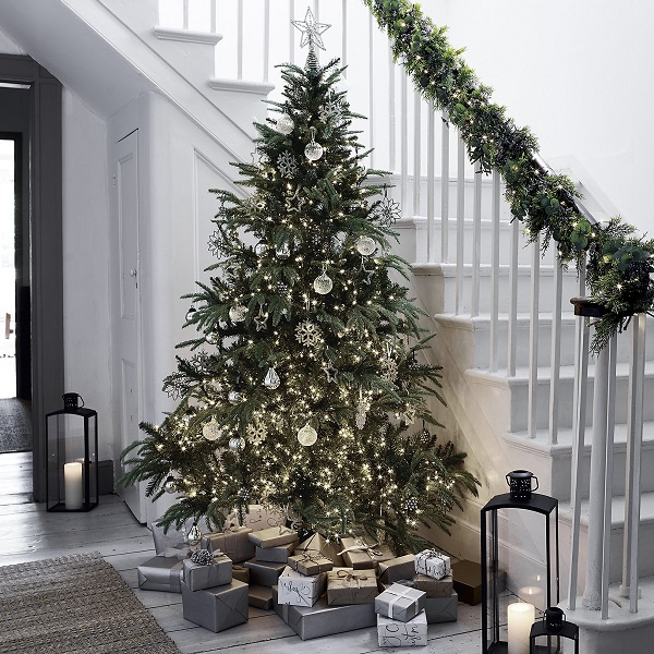 Christmas Decorations start with the big tree - ideally in pride of place and reaching the ceiling