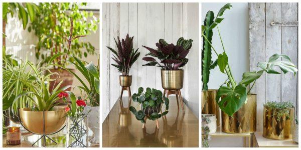 brass planters
