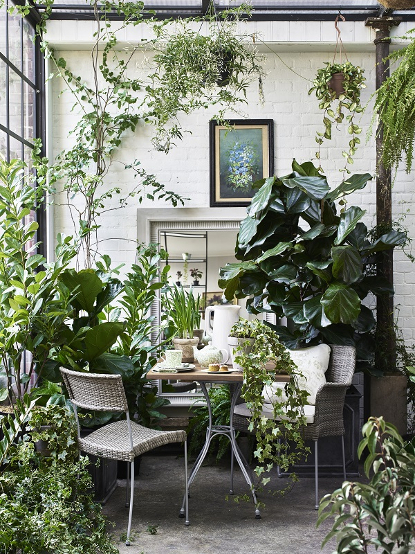 The Joys (and Pain) of a Garden Room Filled with Plants