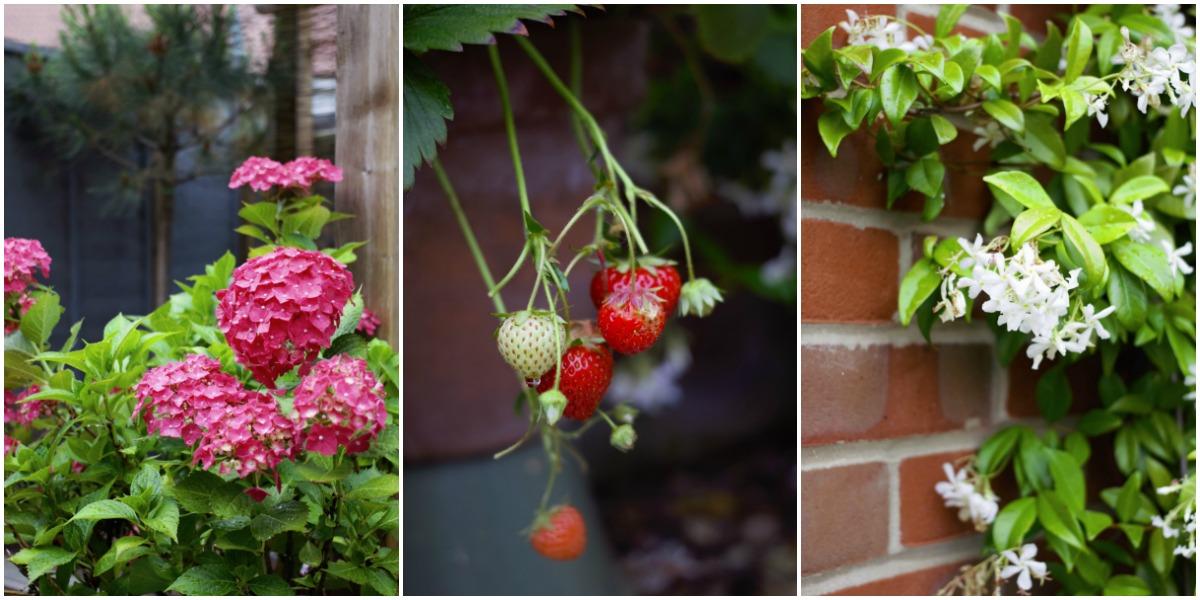 garden, style, plants,