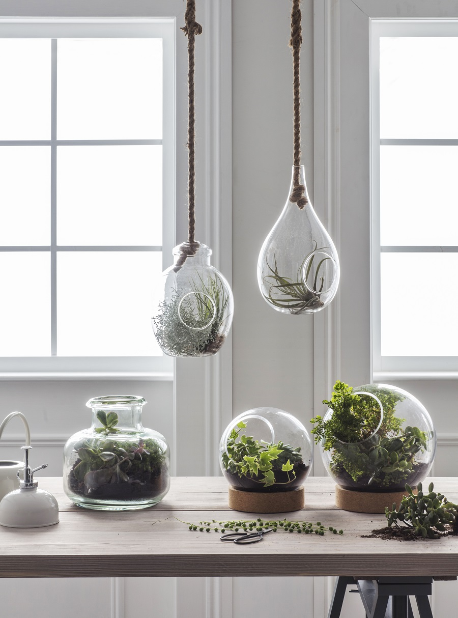 Uncluttered Homewares - simple glass terrariums