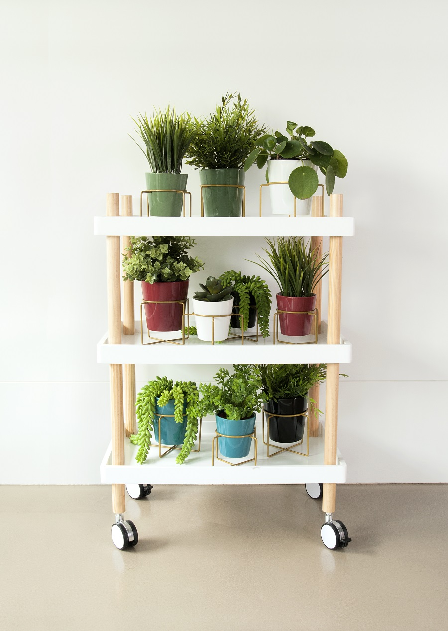 Styling With House Plants
