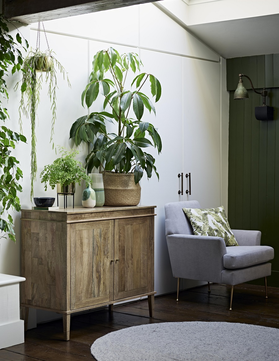 Seven Things to Avoid When Caring for Houseplants