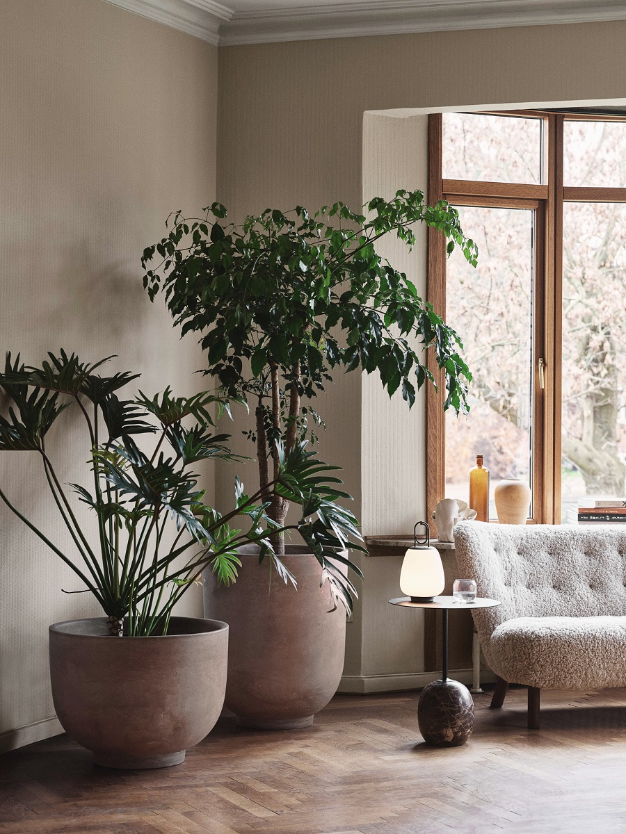Decorating With Large Indoor Plants