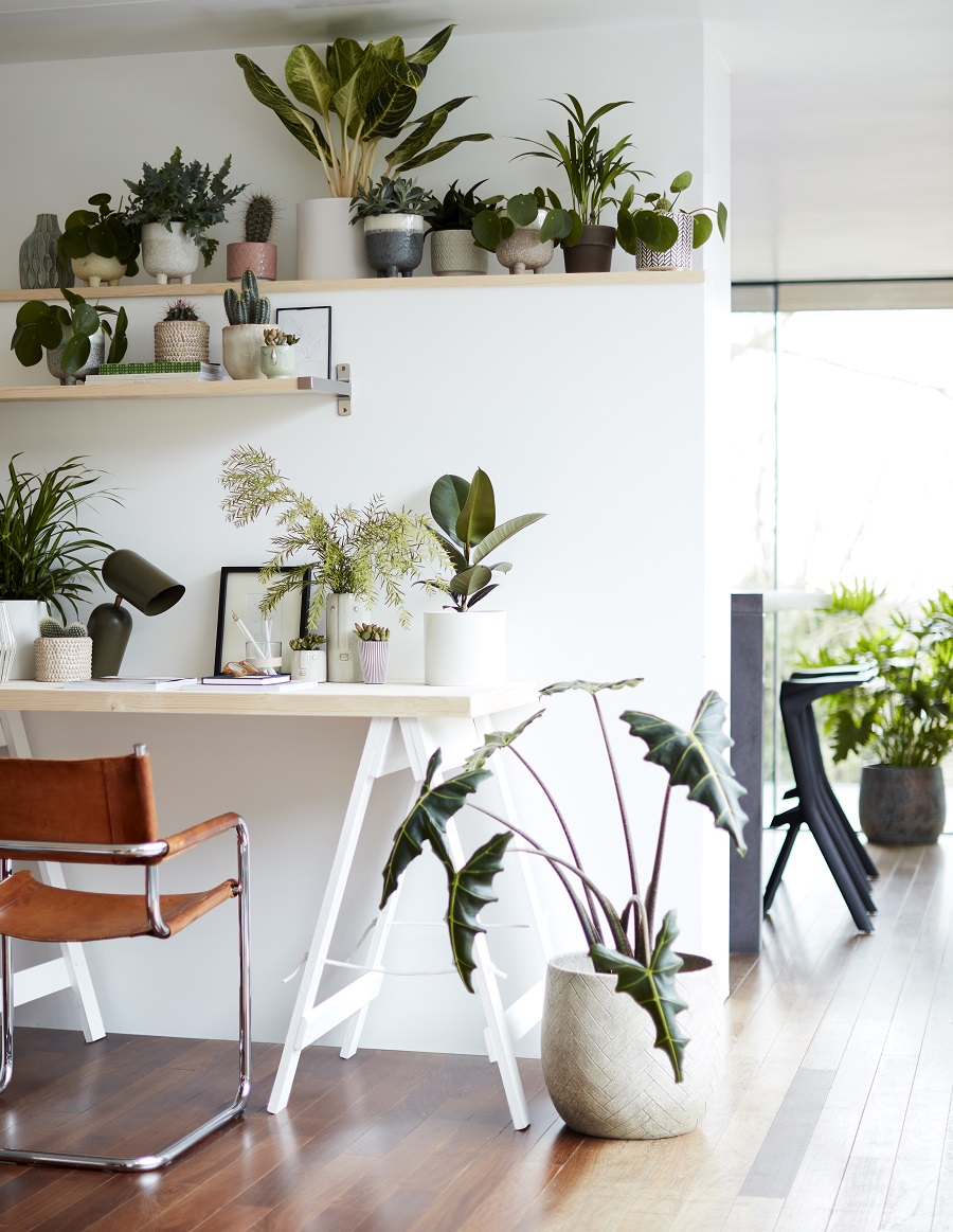 A Place for Plants and Plants in Their Place